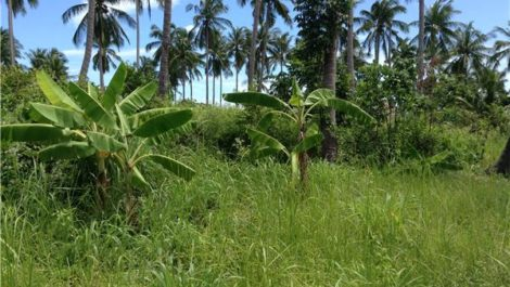 Land for sale ~ Chaweng Noi