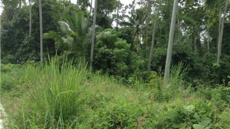 Land for Sale ~ Na Muang
