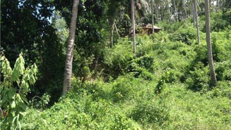Land for Sale ~ South of Samui